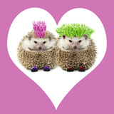 Punk Girl and Boy Hedgehog in Pink Heart Shaped Frame Photographic Print