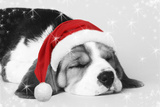 Beagle Dog Puppy Asleep Wearing a Christmas Hat Photographic Print