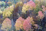 Mixed Forest in Autumn with Pine Poplar Oak Lime Photographic Print