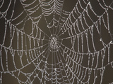 Spider's Web with Morning Dew Photographic Print