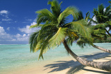 Madagascar Sandy Beach and Palm Trees Photographic Print
