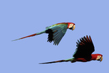 Red and Green Macaw Photographic Print