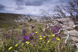 Spring Wildflowers Photographic Print