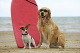 Golden Retriever Wearing Sunglasses and Jack Photographic Print
