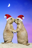 Black-Tailed Prairie Dog Pair in Christmas Hats Photographic Print