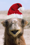 Bactrian Camel Wearing Christmas Hat Photographic Print