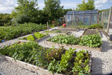Vegetables Growing in Raised Beds on Garden Plot Photographic Print