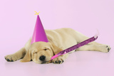 Labrador (8 Week Old Pup) with Party Hat Photographic Print