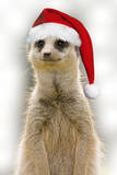 Meerkat Wearing Christmas Hat Photographic Print