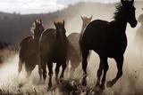 Quarter, Paint Horses Running Photographic Print