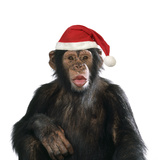 Chimpanzee Showing Lips 'Kissing' Wearing Christmas Hat Photographic Print