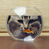 Cat Looks at Goldfish in Bowl Photographic Print