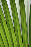 Palm Frond Valle De Mai National Park Photographic Print