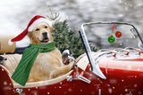 Golden Retriever Driving Car Collecting Christmas Tree Papier Photo