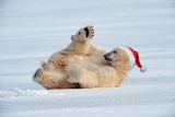 Polar Bear Lying on Ice Wearing Christmas Hat Photographic Print
