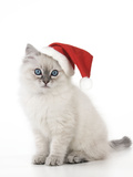 10 Week Old Ragdoll Kitten Wearing Christmas Hat Photographic Print