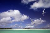 Cosmoledo Lagoon Photographic Print