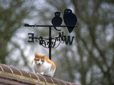 Cat on Roof with Weathervane Photographic Print