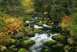 Primeval Forest with Brook in Autumn Photographic Print