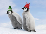 Emperor Penguin, Two Chicks with Woolly Hats Photographic Print