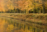 Beech Trees Autumn Colours Along River Bank Photographic Print