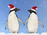 Adelie Penguin Holding Hands Wearing Christmas Hats Photographic Print