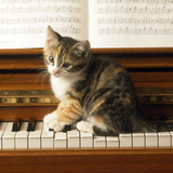 Kitten Playing on Piano Photographic Print