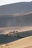 Desert Bactrian Camel Train, Gobi Desert, China Photographic Print