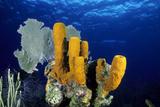 Tube Sponge Photographic Print