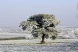 Frost Covering Fields and Pine Tree Photographic Print