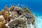 Stony and Lobe Corals (Porites Lobe) Photographic Print