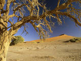 Namib Desert Dead Camelthorn Tree and Red Dune Fotografie-Druck