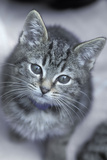 5 6 Week Old Kitten Photographic Print