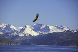 Bald Eagle in Flight Fotodruck
