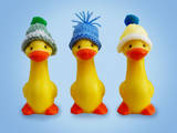Ducklings in Woolly Hats Photographic Print