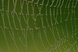 Cobweb with Droplets of Morning Dew Photographic Print