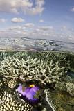Magnificent Sea Anemone at Hardcoral Garden Photographic Print