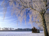 Birch and Hut, Frost Covered Birch Tree and Hut in Winter Photographic Print