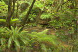 Rainforest River Flowing Through Lush Temperate Photographic Print