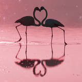 Greater Flamingo Pair Kissing Photographie