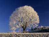Frosty Landscape, Frost Covered Tree and Bench Photographic Print