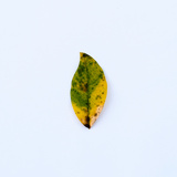 Single Leaf Photographic Print by Clive Nolan