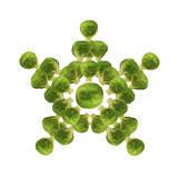Brussel Sprout in Star or Snowflake Shape Photographic Print