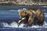 Coastal Grizzly Bear with Salmon in Mouth Photographic Print