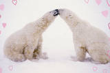 Polar Bears with Pink Hearts Photographic Print