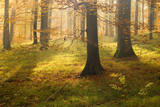 Autumn Forest the Low Morning Sun Casts Sunrays Photographic Print