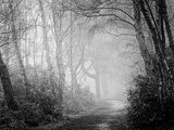 Misty Path in Black and White Photographic Print by Craig Roberts