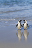 Jackass Penguin Two on Beach Photographic Print