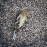 Dead Bird Photographic Print by Clive Nolan