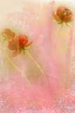 Pink Flower Photographic Print by Mia Friedrich